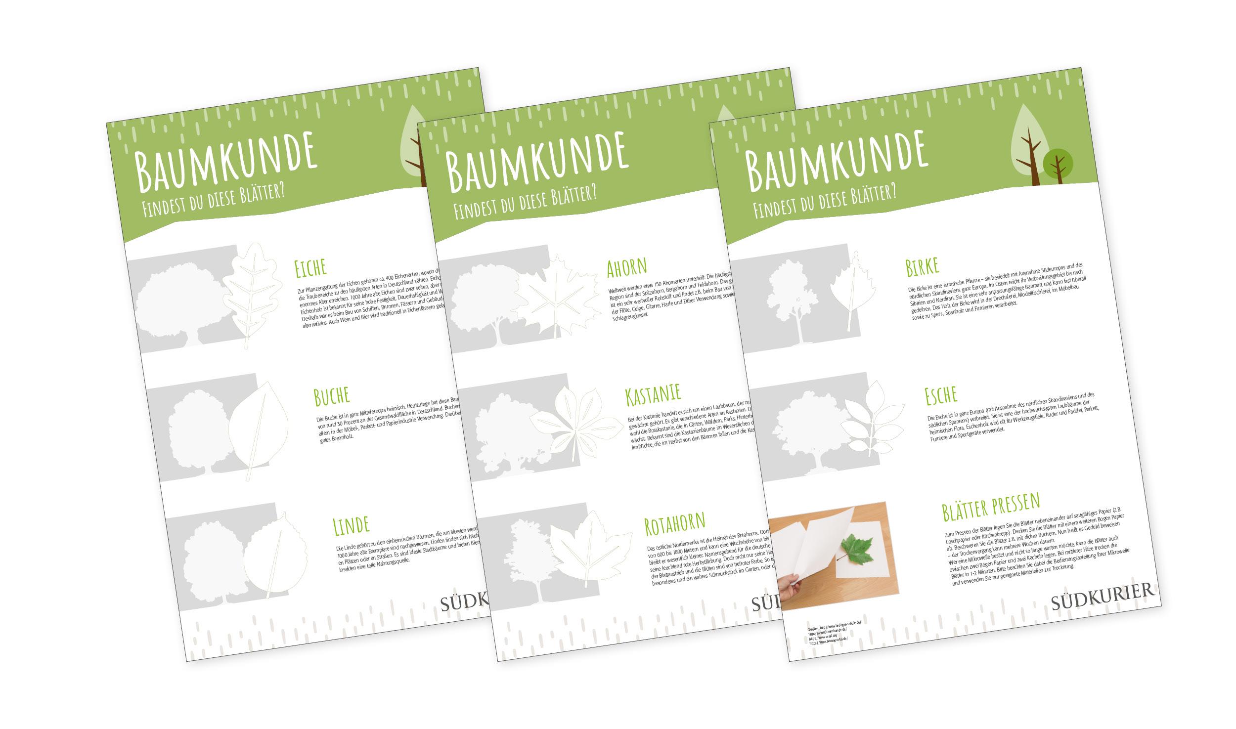 SK_Ideenbox_Baumkunde