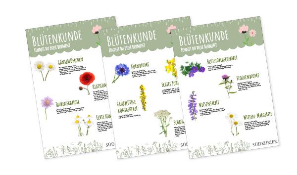 SK_Ideenbox_Blütenkunde