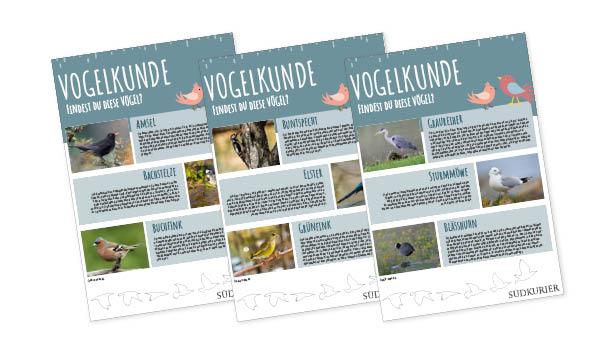 SK_Ideenbox_Vogelkunde