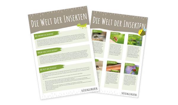 SK_Ideenbox_Insekten